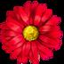 鲜花猫盒子破解版appV2.0最新版