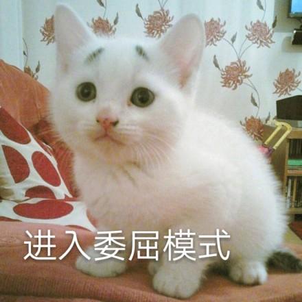 可爱猫咪表情包无字图片无水印版
