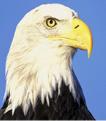 白头鹰APPV1.0