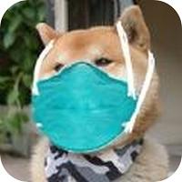 口罩护目镜头像一键生成器免费版v1.0.2安卓版