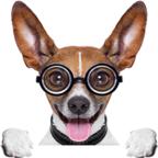 攒钱犬合成赚钱平台v1.0.0安卓版