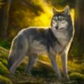 独狼模拟器手机免费版v1.0.1安卓版