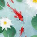 鱼戏荷塘红包版v1.0