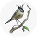 青鸟转发阅读赚钱appv1.0.0