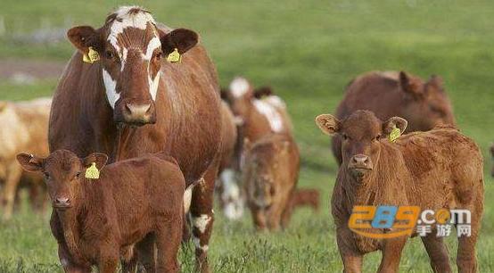 龙森牧业养牛赚钱官方版