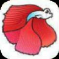 斗鱼阅读手机赚钱appv1.0安卓版