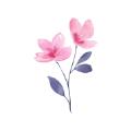 Floret app安卓免费版v1.0安卓版