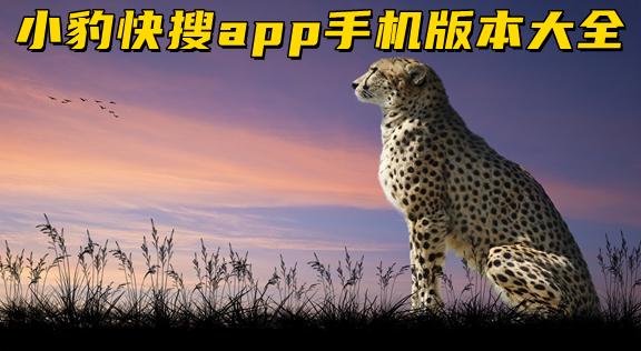 小豹快搜app手机版本大全