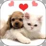 猫咪情绪识别软件appv1.2.0安卓版