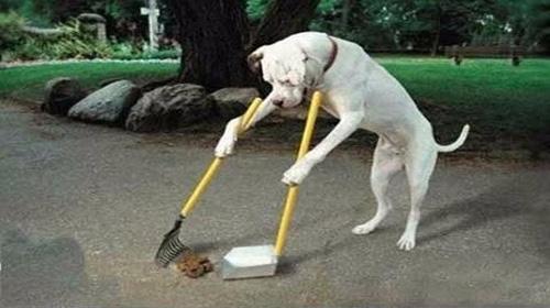 【哔】了狗的夏天:CJ开到一半,公司倒闭了