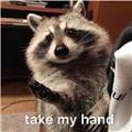 浣熊可爱表情包