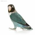 老鸟宝盒vip安卓破解版 v1.0